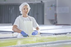 Женский работник на белой производственной линии сыра фета в industr стоковые фотографии rf