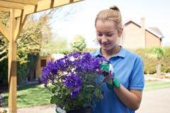 Женский садовник ландшафта держа завод Стоковое фото RF
