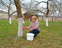 Женский садовник отбеливает хобот яблони Весна работает в саде стоковые изображения rf