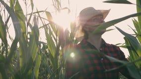 Женский фермер в ниве Сельскохозяйственные работы сбора на ниве акции видеоматериалы