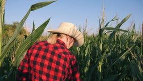 Женский фермер в ниве Сельскохозяйственные работы сбора на ниве сток-видео