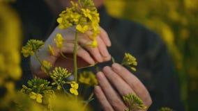 Женский фермер в поле семени масличной культуры культивируемом рапсом аграрном рассматривая и контролируя рост заводов сток-видео