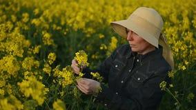 Женский фермер в поле семени масличной культуры культивируемом рапсом аграрном рассматривая и контролируя рост заводов акции видеоматериалы