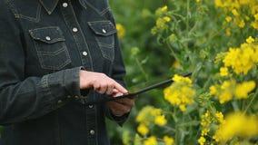 Женский фермер используя планшет цифров в рапсе семени масличной культуры культивировал аграрные заводы поля рассматривая и контр акции видеоматериалы