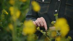 Женский фермер используя планшет цифров в рапсе семени масличной культуры культивировал аграрные заводы поля рассматривая и контр сток-видео