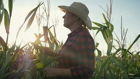 Женский фермер с таблеткой в ее руках в ниве Фермер рассматривает мозоль и записывает результаты акции видеоматериалы