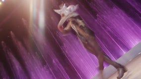 Женский фигурист делая обтекатель втулки на льде против красочных фонтанов moscow Россия сток-видео