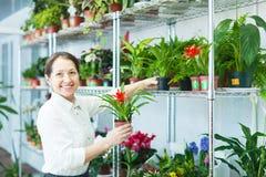 Florist с Cyclamen на магазине цветка Стоковые Фото