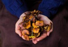 2 женских руки держа пригорошню съестных грибов Стоковое Изображение