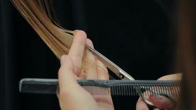 Женское владение парикмахера в руке между замком пальцев волос, гребнем и крупным планом ножниц видеоматериал