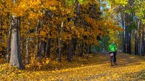 Женское катание велосипедиста на пути леса покрытом с желтым Autum стоковые изображения