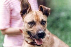Женское предприниматель кладя на поводок на собаке, милой коричневой собаке усмехаясь вне стоковые изображения