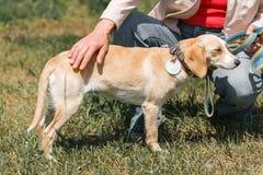 Женское предприниматель petting милая собака, женщина лаская дружелюбный счастливый br стоковые изображения rf