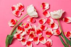 Женственная стильная насмешка вверх с цветком тюльпана, лепестками Космос экземпляра для вашего дизайна, для свадеб, приглашения, стоковая фотография rf