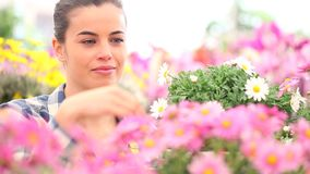 Женщина весеннего времени усмехаясь пахнет маргаритками в саде сток-видео