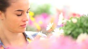 Женщина весеннего времени усмехаясь пахнет маргаритками в саде акции видеоматериалы