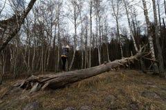 Женщина взбираясь на упаденном дереве в лесе на пляже около Балтийско стоковое изображение rf