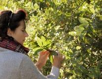 женщина взглядов листьев осени милая Стоковые Изображения