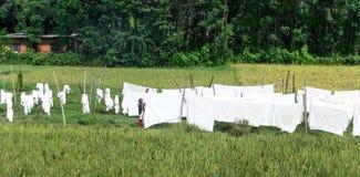 Женщина висит вне белые листы, Непал Стоковые Изображения RF