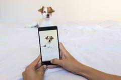 Женщина вручает фотографировать с мобильным телефоном милого детеныша Стоковые Фото