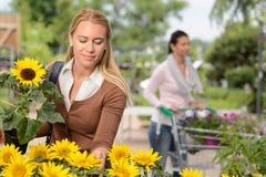 Женщина выбирая в горшке солнцецвет в садовом центре Стоковые Фото