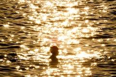 Женщина в золотом море Стоковые Фотографии RF