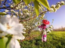 Женщина в костюме Японии на вишневом цвете Стоковое фото RF