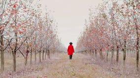 Женщина в красном пальто идя самостоятельно между деревьями в саде яблока на сезоне осени Девушка идет вперед далеко от камеры акции видеоматериалы