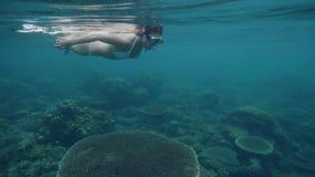 Женщина в маске плавая подводные и наблюдая коралловый риф и рыбы Молодая женщина в океане и акции видеоматериалы