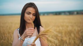 Женщина в национальной белой рубашке держит в руке созретые уши пшеницы на предпосылке поля золота Сбор акции видеоматериалы