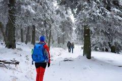 Женщина в платье цвета взбираясь среди деревьев покрыла с снегом Стоковые Фотографии RF