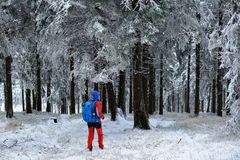 Женщина в платье цвета взбираясь среди деревьев покрыла с снегом Стоковое Изображение