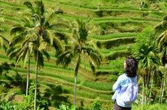 женщина в террасе риса Tegalalang Стоковые Изображения