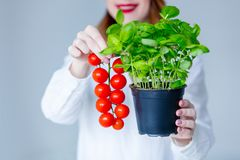 Женщина в шляпе держа травы базилика и красных томатов Стоковое Изображение RF