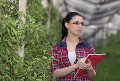 Женщина в яблоневом саде стоковая фотография
