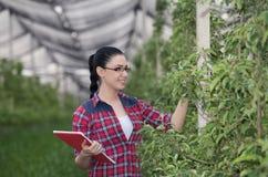 Женщина в яблоневом саде стоковые изображения rf