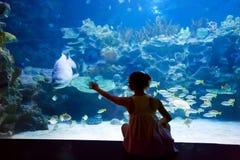 Женщина в oceanarium около рыб gar аллигатора Стоковое Изображение