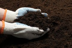 Женщина держа плодородную почву в руках Садовничая сезон стоковые фото