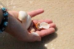 Женщина держа seashells в крупном плане рук стоковые изображения