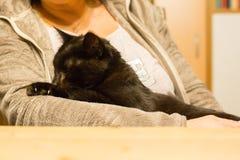 Женщина держит расслабленного кота в руке Стоковые Фотографии RF