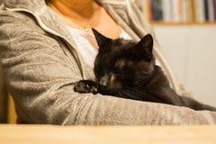 Женщина держит расслабленного кота в руке Стоковое Фото