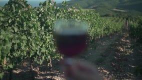 Женщина держит стекло красного вина на заходе солнца на фоне виноградника и гор акции видеоматериалы