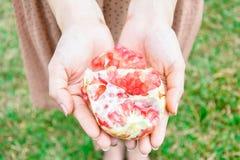 Женщина держа конец плодоовощ гранатового дерева вверх Стоковая Фотография