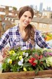 Женщина держа коробку заводов на саде крыши Стоковое Изображение