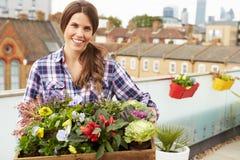 Женщина держа коробку заводов на саде крыши Стоковое Фото