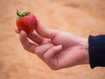 Женщина держа клубнику в руках Стоковая Фотография
