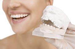 Женщина держа образец зубов стоковые фото