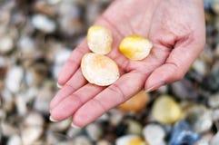 Женщина держа seashells стоковое изображение rf