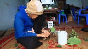 Женщина делая бетэл с бетэлом и арекой Таможни жевать бетэла многолетни в Вьетнаме видеоматериал