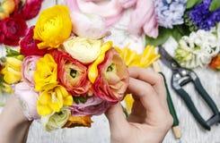Женщина делая букет персидского лютика цветет (лютик) a Стоковая Фотография RF